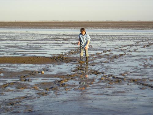 strand ameland wadrust